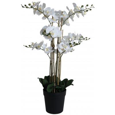 Konstväxt - Orkidé 9 stänglad H90 cm - Vit