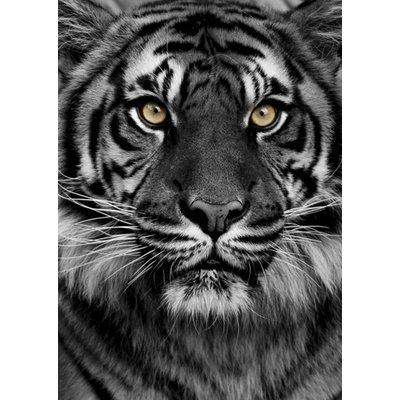 Poster Tiger