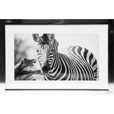 Tavla med kromad ram (Zebra) - 40x60 cm