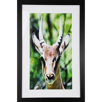 Tavla med ram (Antilop) - 40x60 cm