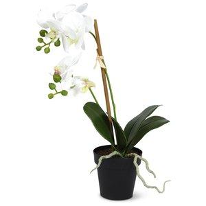 Konstväxt - Orkidè H60 cm & 149.00