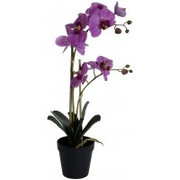 Konstväxt - Orkidé 2 stänglad H54 cm - Rosa