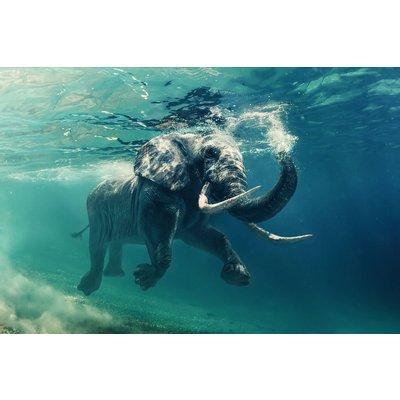 Glastavla Elephant - 120x80 cm