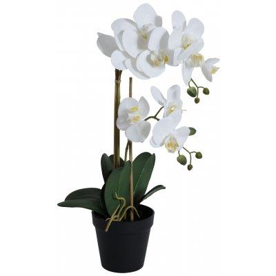 Konstväxt - Orkidé 2 stänglad H54 cm - Vit