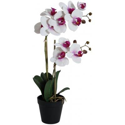 Konstväxt - Orkidé 2 stänglad H54 cm - Vit/Rosa