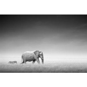 Poster Elefanter på savannen thumbnail