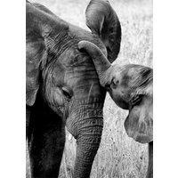 Poster Elefant med unge