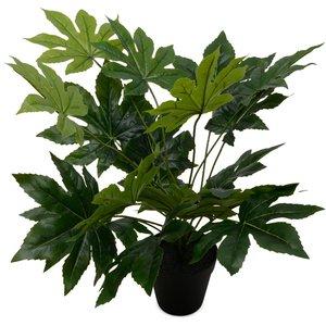 Konstväxt - Papaya 50 cm & 195.00