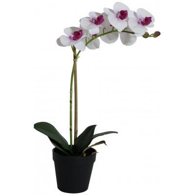 Konstväxt - Orkidé 1 stänglad H48 cm - Vit/Rosa